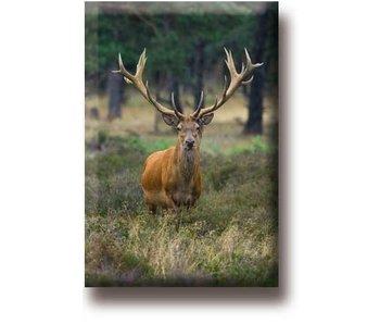 Fridge magnet, Deer, buck
