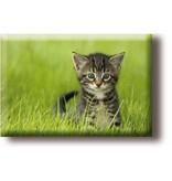 Aimant pour réfrigérateur, petit chat dans l'herbe