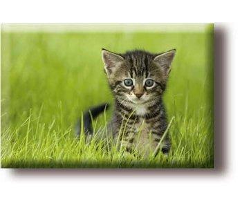 Koelkastmagneet, kleine poes in het gras