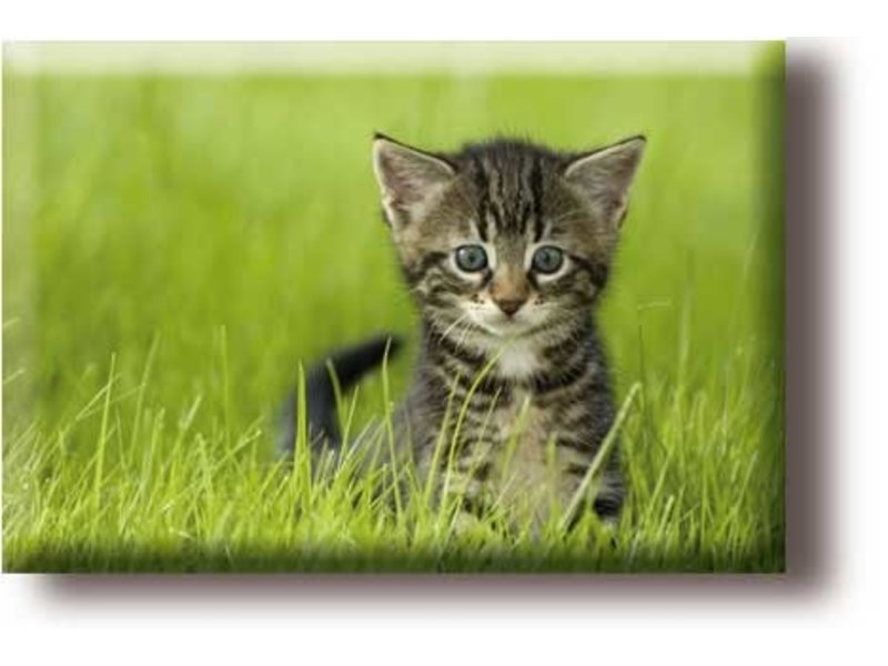 Kühlschrankmagnet, kleine Katze im Gras