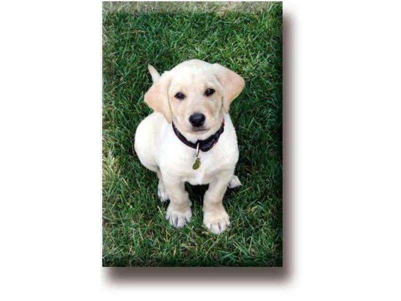 Koelkastmagneet, Labrador, Puppy