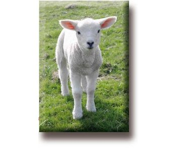 Fridge magnet, Lamb