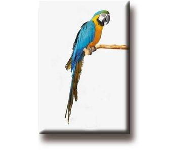 Fridge Magnet, Parrot, Macaw