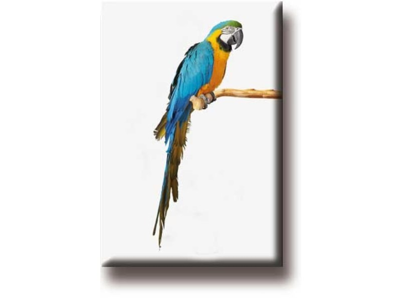 Kühlschrankmagnet, Papagei, Ara