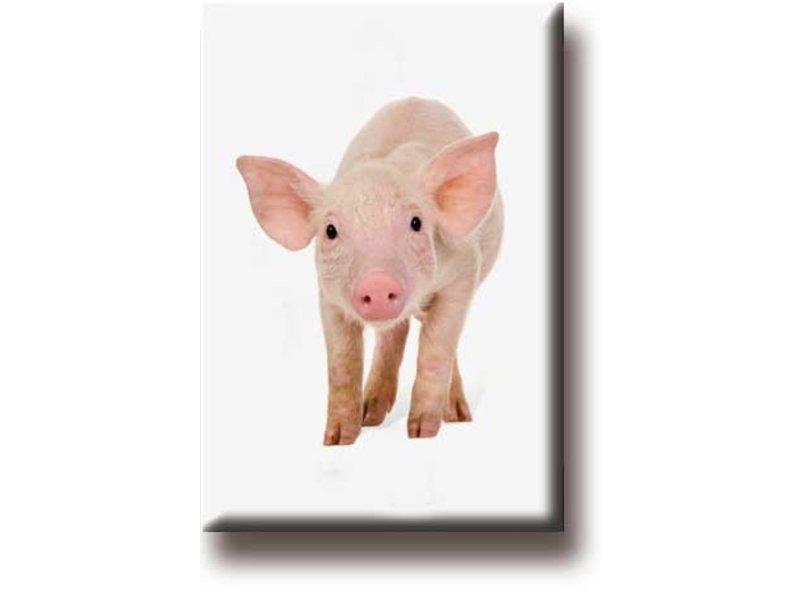Fridge magnet, pig, piglet