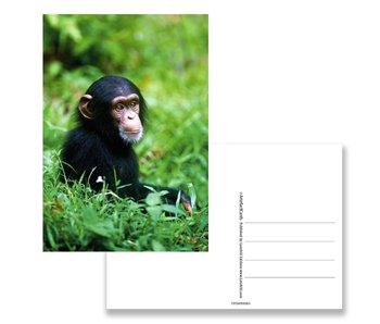 Postal, chimpancé bebé