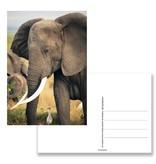 Carte postale, éléphant