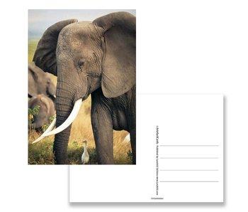 Postcard,  Elephant