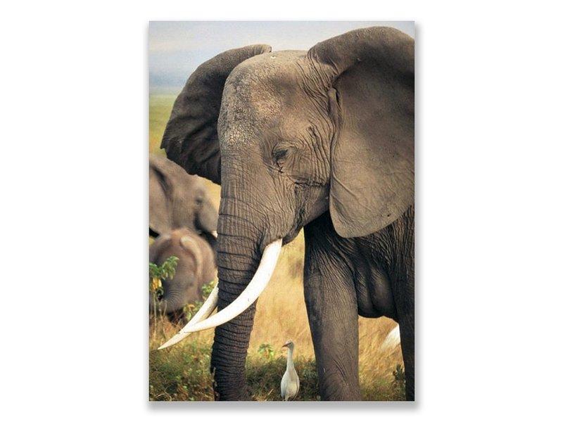 Postkarte, Elefant