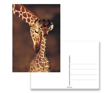 Postkarte, Giraffe