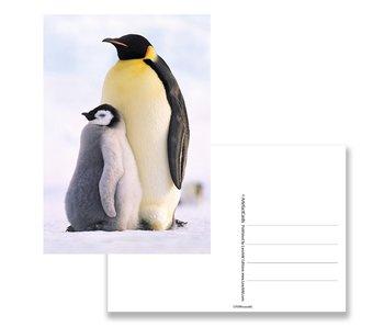 Carte postale, Pingouins