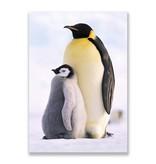 Postkarte, Pinguine