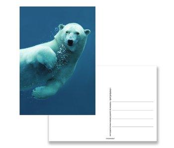 Ansichtkaart,  IJsbeer