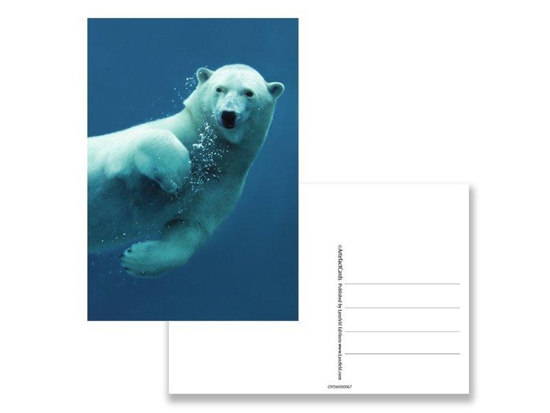 Postal, oso polar