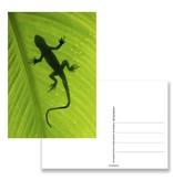 Carte postale, Lézard