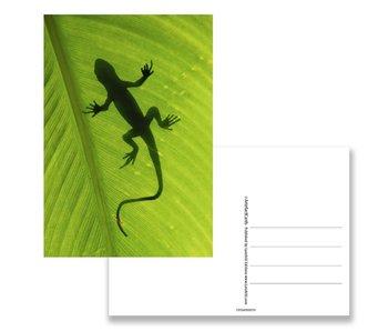 Postkarte, Eidechse