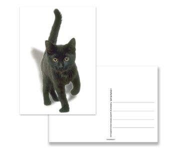 Postal, Gatito, negro