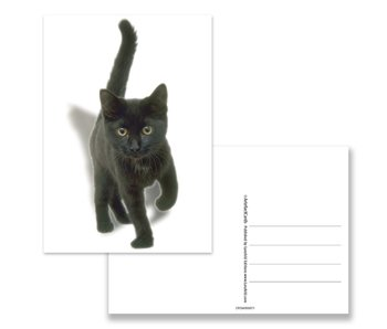 Postcard,  Black Kitten
