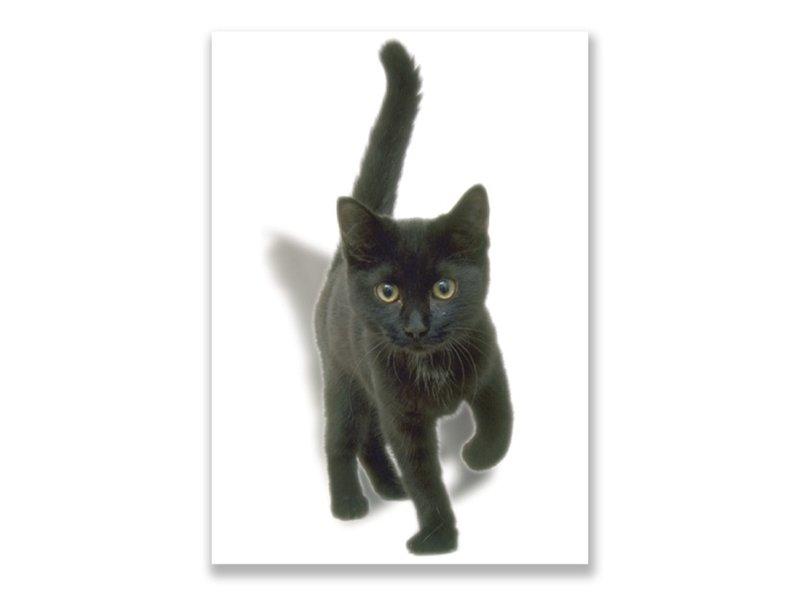 Ansichtkaart,  Kitten, zwart