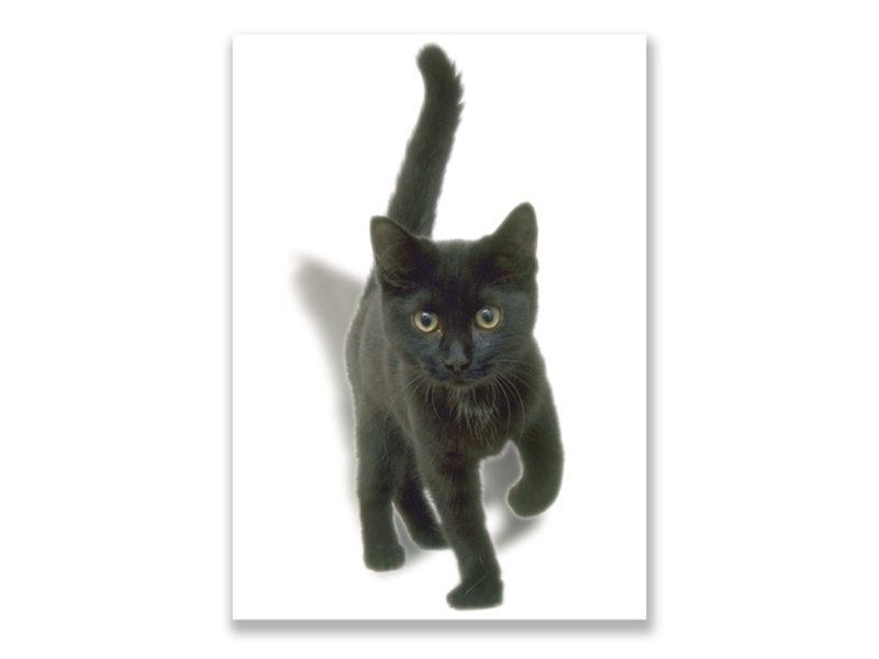 Carte postale, chaton, noir