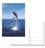 Postkarte, Delfine