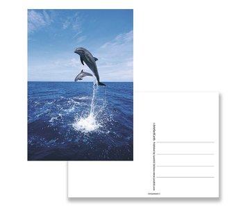 Carte postale, dauphins