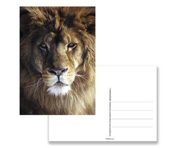Carte postale, tête de lion