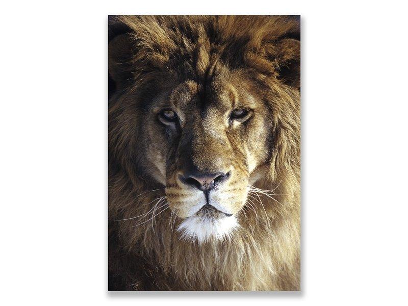 Postal, cabeza de león