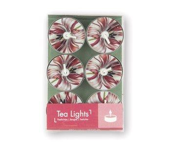 Teelicht, Merian, drei Tulpen