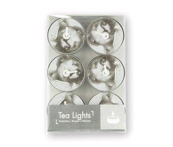 Tea light, Rembrandt, Curious Face