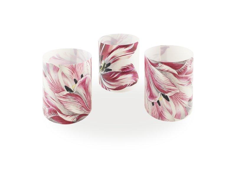Candle shades , Merian, Three Tulips