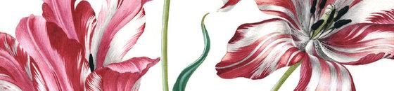 Recuerdos de tulipán