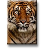 Imán de nevera, cabeza de tigre