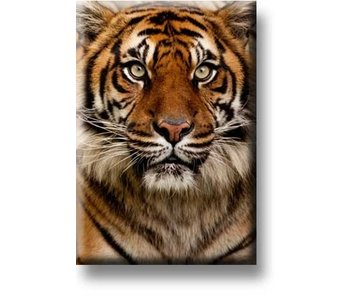 Fridge magnet, Tiger head