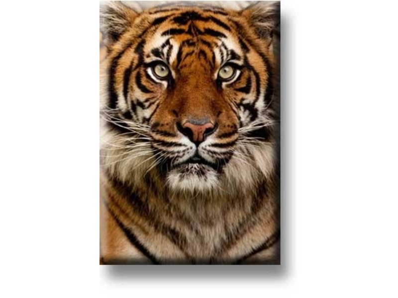 Kühlschrankmagnet, Tigerkopf