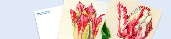 Postkarten-Tulpen