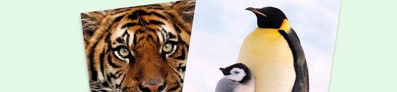 Ansichtkaarten dieren