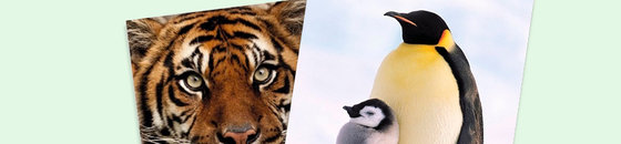 Cartes postales animaux