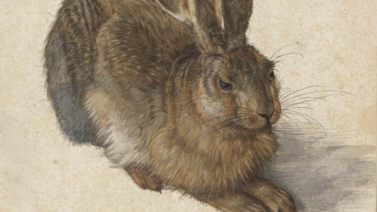 Nieuwe Collectie: Haas (1502), Albrecht Dürer