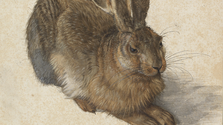 Neue Sammlung: Hase (1502), Albrecht Dürer