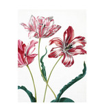 Softcover art sketchbook, Merian, Three tulips