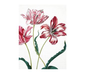 Künstlerjournal,  Merian, drei Tulpen