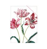 Chemise à dossier en papier avec fermeture élastique, Merian, Trois tulipes