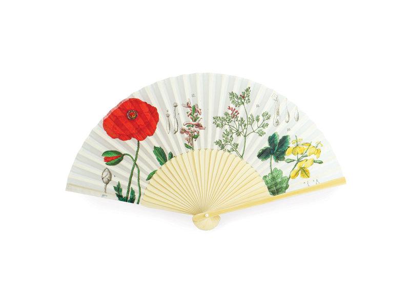 Fan , Poppy, Hortus Botanicu