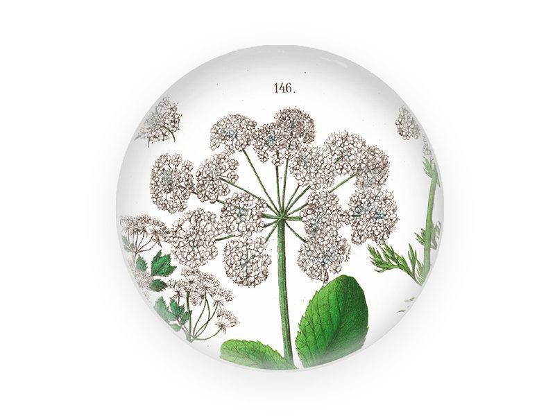 Briefbeschwerer, Holunder, Hortus Botanicus