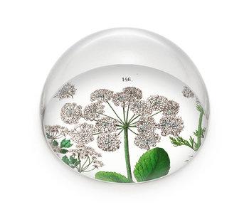 Glazen bolle  presse papier, Zevenblad, Hortus Botanicus