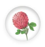 Presse-papier en verre, Fleur de trèfle rouge, Hortus Botanicus