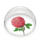 Glass Dome/Paperweight, Red clover flower,  Hortus Botanicus