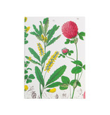 Escritura pegada, A5, Flor de trébol rojo, Hortus Botanicus