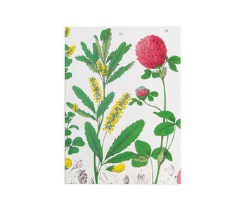 Glued Exercise book , A5, Red clover flower,  Hortus Botanicus